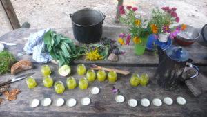 Kräuterpädagogik-Salbe kochen